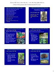 Bệnh nấm hại cây rau, CAQ và CCN