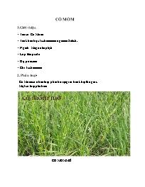 Kĩ thuật trồng Cỏ mồm