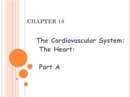 Y khoa, y dược - Chapter 18: The cardiovascular system